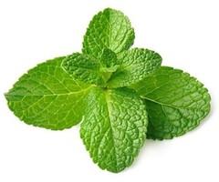 Shop online Farm fresh Mint leaves/Pudina Leaves 1 Bunch   180-200 Gram