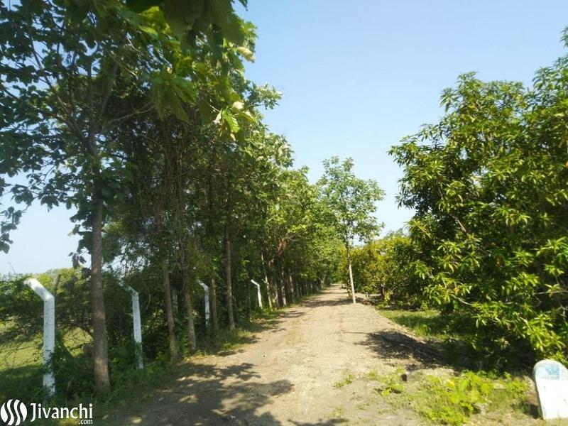 Farm land For seles - 3